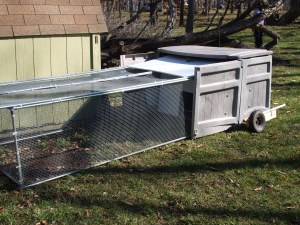 In the running for ugliest chicken tractor of all time!